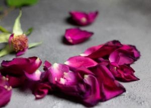cremation services in Mohnton, PA