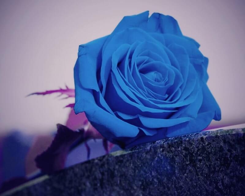 cremation services in Cumru Township, PA